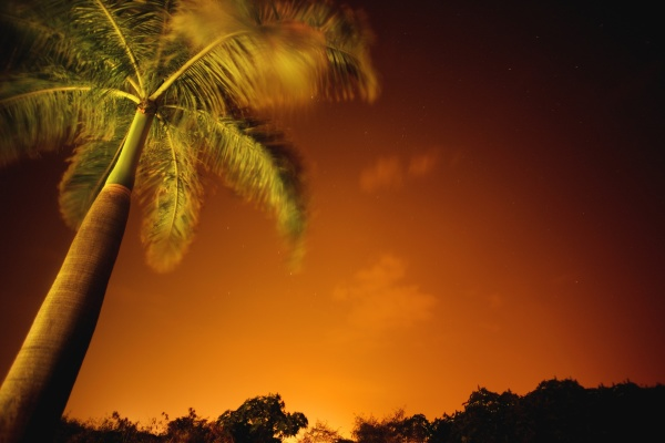 tropical palm tree at night