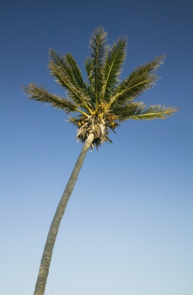 palm tree in the florida keys