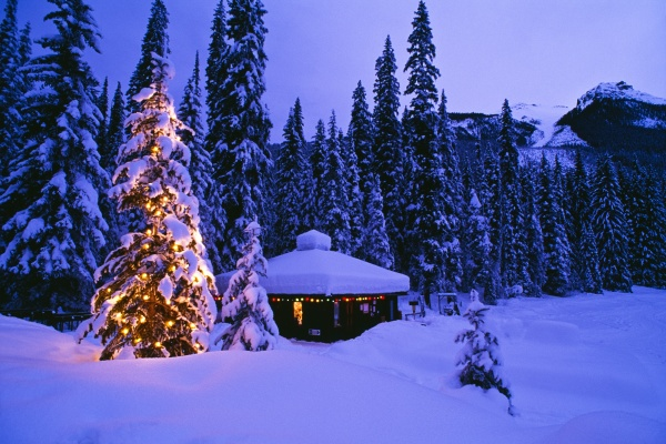 tree with christmas lights emerald