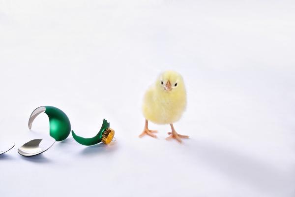 chick beside broken christmas ornament