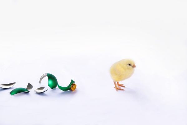 baby chick with broken glass ball