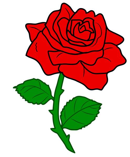 rose red flower love nature valentine
