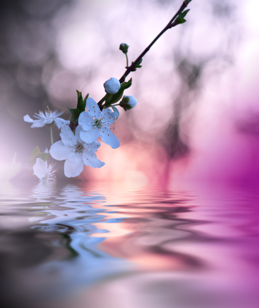 beautiful flowers reflected in the water