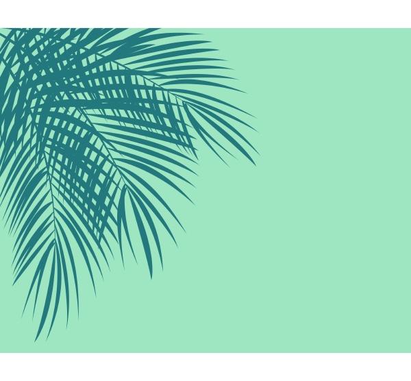 colored palm leaf vector background illustration