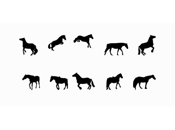 horse runs hops gallops