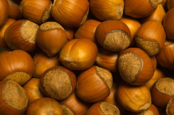hazelnut filbert nuts macro food background