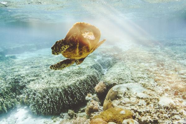 australia queensland great barrier reef green