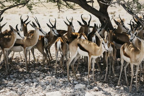 namibia etosha national park herd of