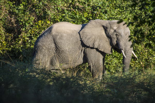 zambia south luangwa national park african