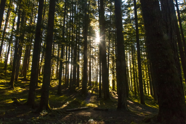 morning sun breaking through the trees