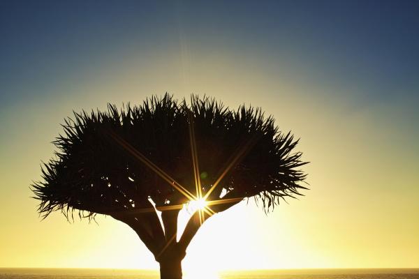 sunburst shining behind silhouette of tree