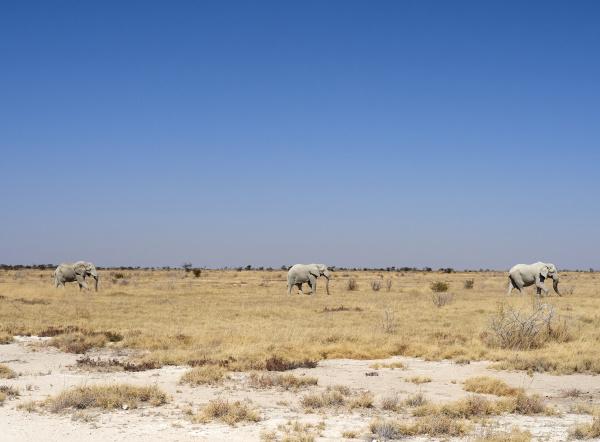 africa namibia halali etosha national park