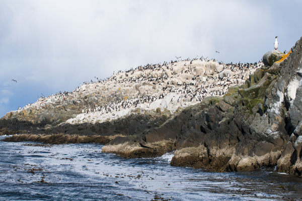 cormorants on an island in the