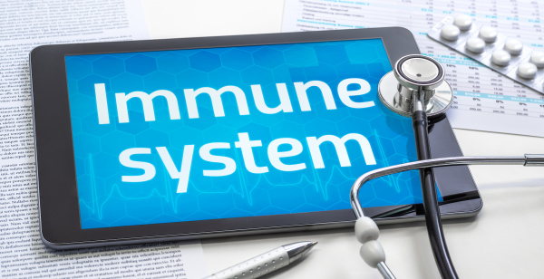 the word immune system on the