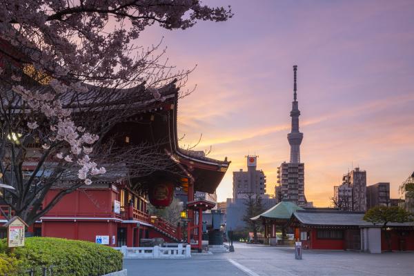 sunrise at sensoji temple in cherry