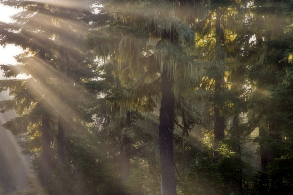 usa oregon willamette national forest god