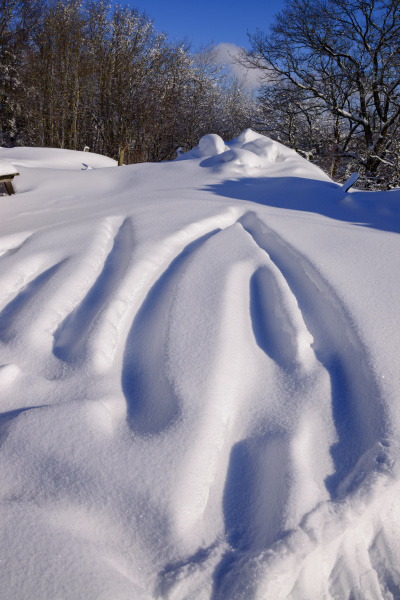 low angle view of snow covered