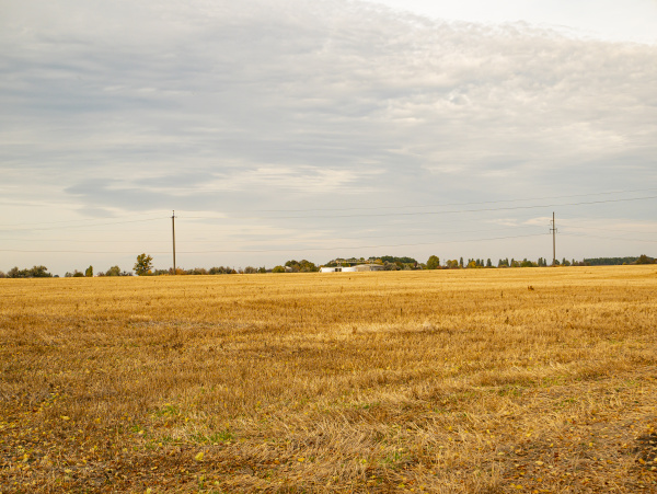 farm field after harvest in the