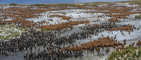 aerial view of penguins on the