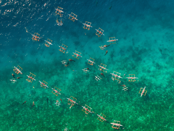 aerial view of tourists swimming with