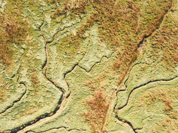 abstract aerial view of wetlands in
