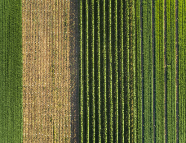 aerial view of agricultural fields at