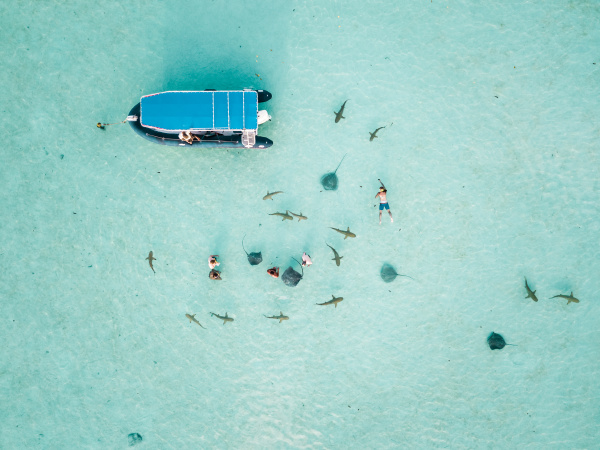 aerial view of people swimming with