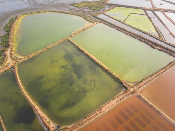 aerial view of salt marsh in