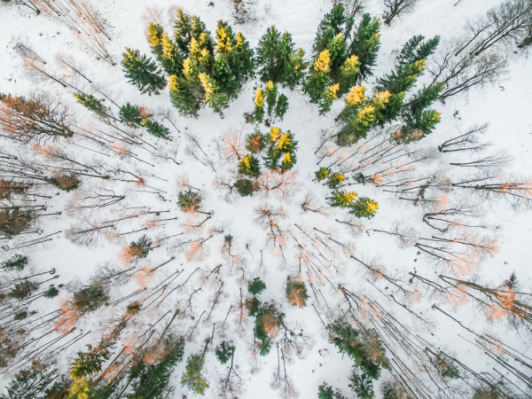 aerial view of a snowy forest