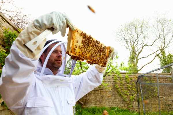 male beekeeper inspecting honeycomb frame in