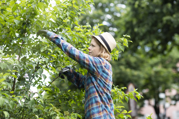mid adult woman pruning tree in