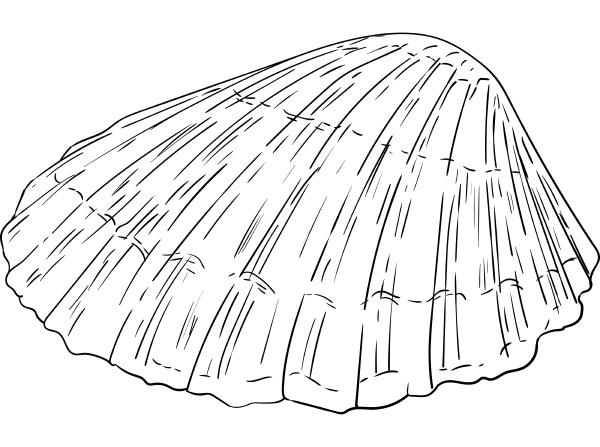 sea shell isolated