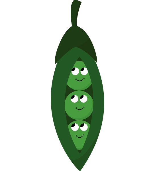 peas vector or color illustration