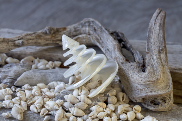nautical still life with shell