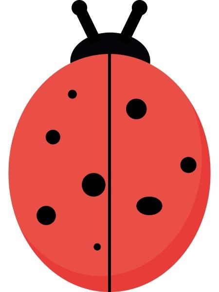 flat ladybug illustration vector