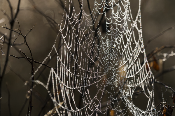 an orb weaver spider weaves a