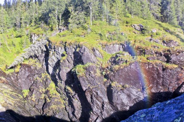 fallen dead broken tree beside rainbow