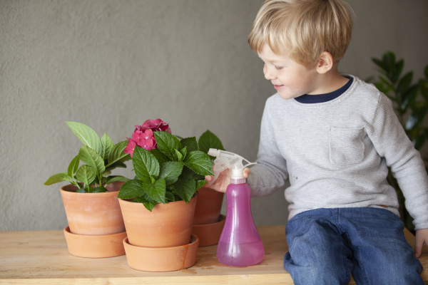 toddler watering potted flower in indoor