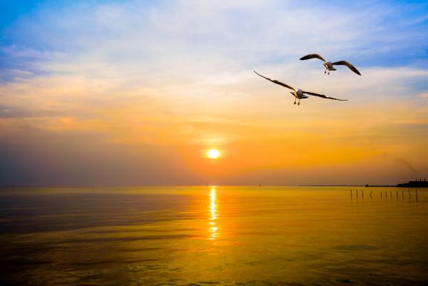 pair of seagulls in sky at