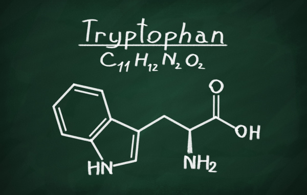 structural model of tryptophan