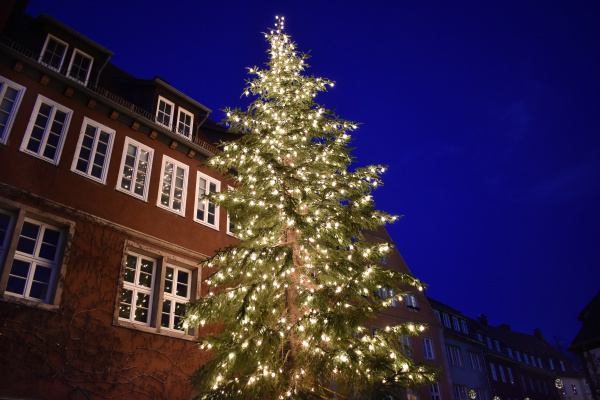 christmas tree in hannover in the
