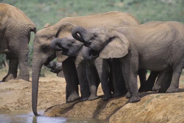 south africa addo elephant national