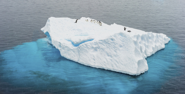 antarctica gentoo penguins iceberg