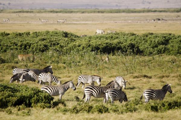 kenya amboseli national park