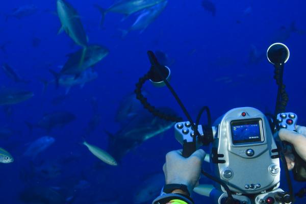 underwater video camera recording fusiliers