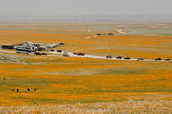 usa ca antelope valley poppy reserve