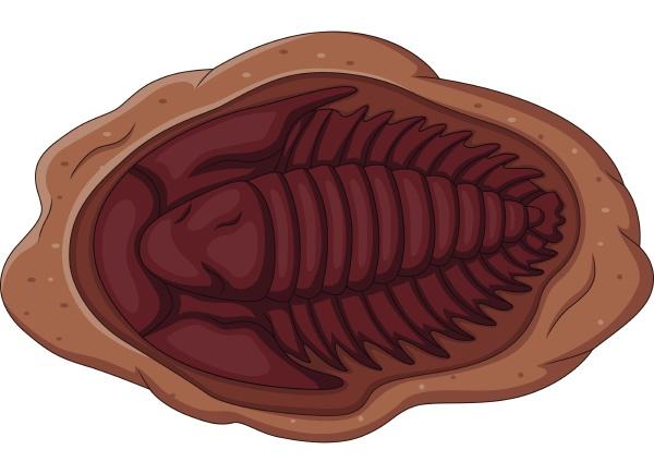 illustration of trilobite fossil on a