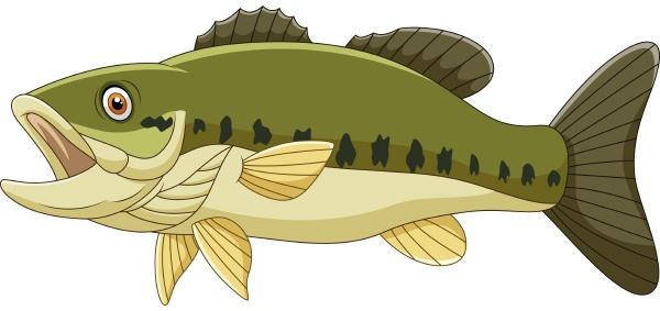 cartoon bass fish isolated on white