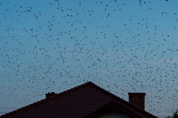 a flock of birds flying over