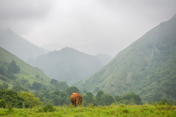 farm cows